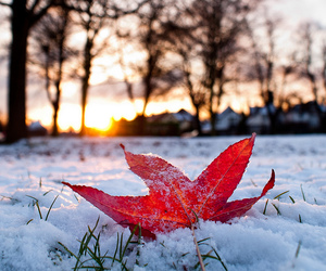 snow, christmas, and leaves image