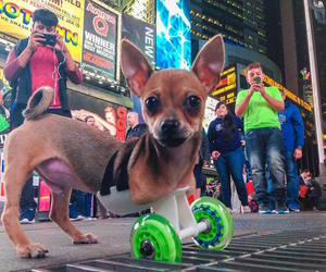 chihuahua, 3d-printed, and two-legged image