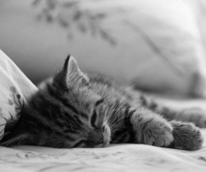 b&w, cute, and kitten image