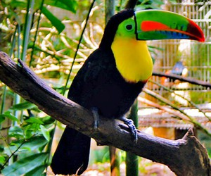 animal, colors, and tucano image