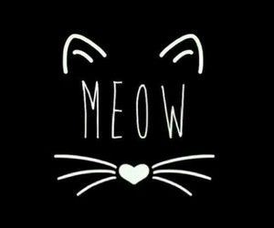 b&w, cat, and meow image