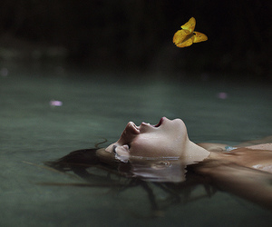 butterfly, concept, and nature image