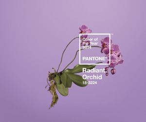 flower, orchid, and pantone image