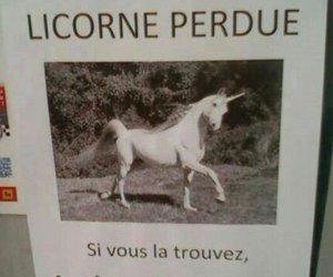 unicorn, funny, and joke image