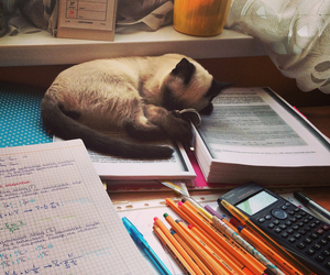 cat, school, and cute image
