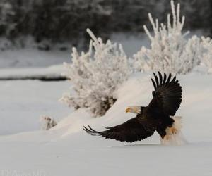 animal, birds, and nature image
