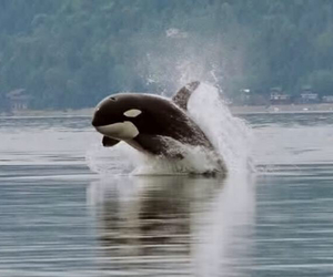 happy, killer whale, and nature image