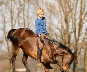 cool, horse, and jesse & andorra image