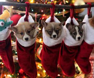 christmas, adorable, and puppy image