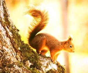 squirrel, animal, and nature image