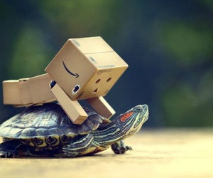 turtle, danbo, and box image