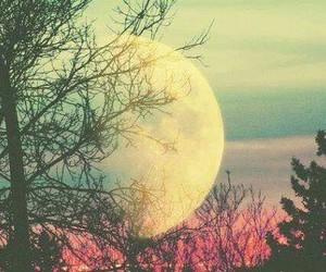 moon, tree, and sky image