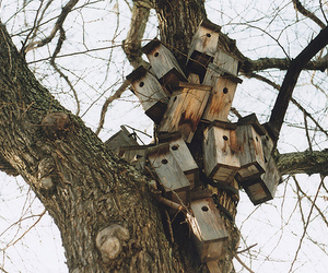 bird house, tree, and nature image