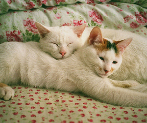 cats, meow, and love image