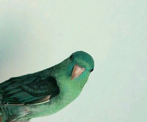 bird, green, and parrot image