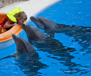 animal, baby, and dolphin image