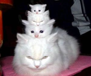 cat, white, and kitten image
