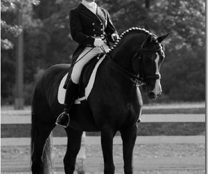 dressage, horse, and love image