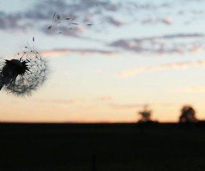 dusk, nature, and flower image