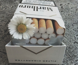 cigarettes, looking for alaska, and flower image