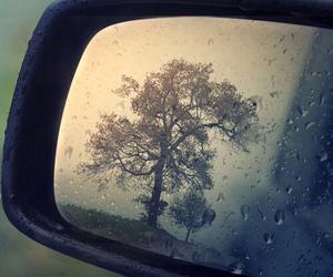 rain, tree, and mirror image