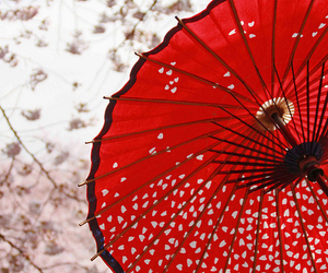 japan, umbrella, and red image