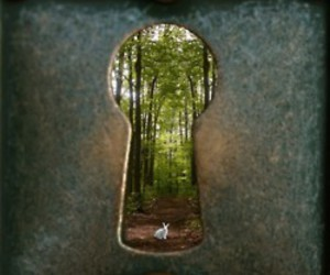 forest, rabbit, and magic image