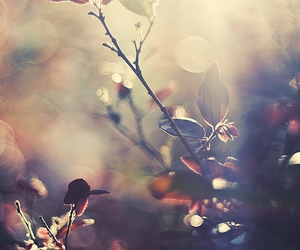 flowers, nature, and light image