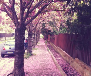 boulevard, cherry blossom, and flowers image