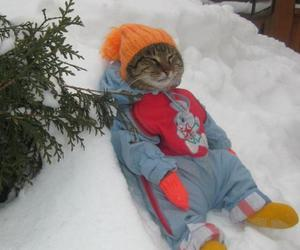 cat, winter, and funny image