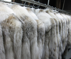 fashion, fur, and pale image