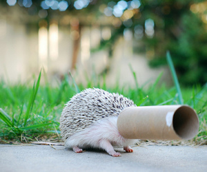 funny, cute, and hedgehog image