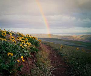 beautiful, flowers, and sky image