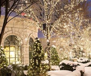 garden, winter, and light image