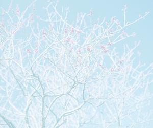 blue, tree, and tumblr image
