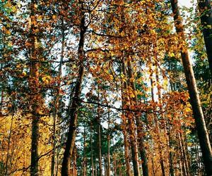 autumn, beautiful, and follow image