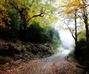 autumn, beeches, and camino image