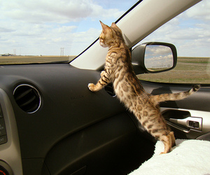adorable, car, and curious image