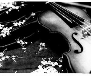 black and white and violin image