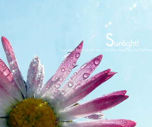 brave, flower, and sunlight image
