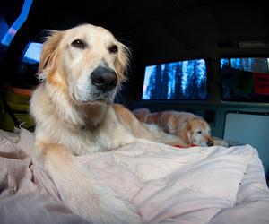 dog, random, and photography image