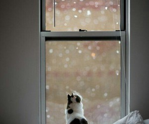 cat, snow, and window image
