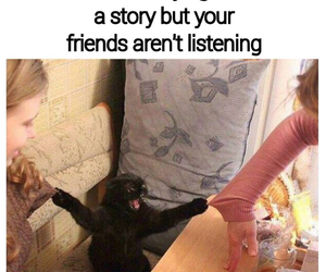 cat, funny, and story image