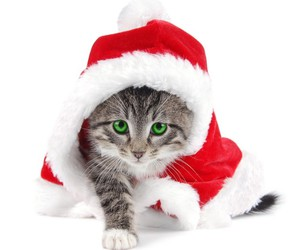 christmas animals image