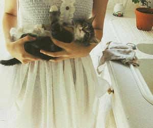cat, cute, and dress image