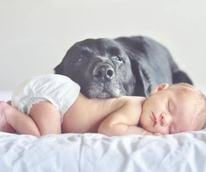 baby, cuteness, and puppy image