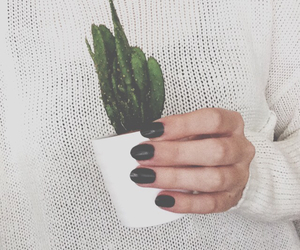 nails, cactus, and plant image
