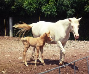 endearing, farm, and horse image