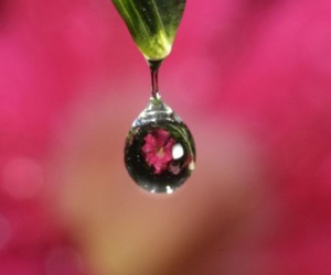 drop, flower, and freen image