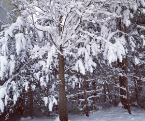 november, snow, and winter image